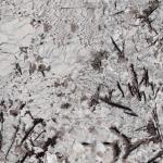 Everest White - Granite polished